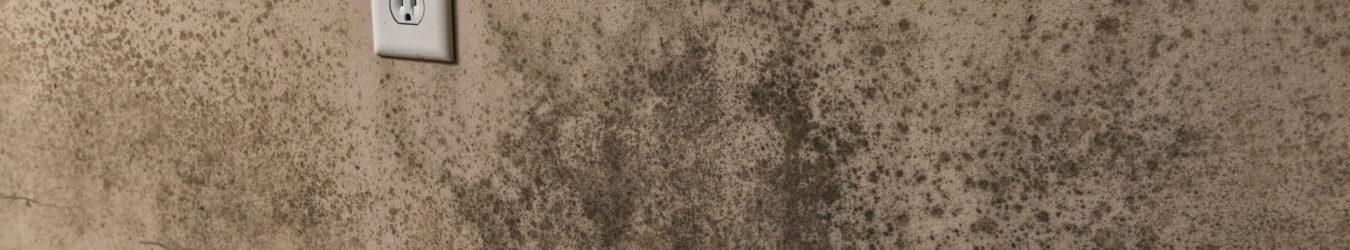 traces de moisissures sur un mur